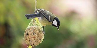 Jak vyrobit lojovou kouli pro sýkorky a další ptáčky