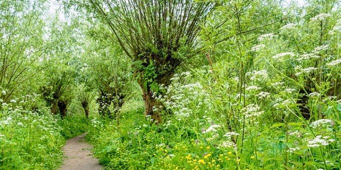 Alergie v dubnu – kvetou stromy, keře, byliny i trávy