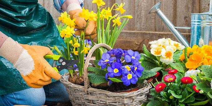 Jaro je tu! 50 tipů, jak osázet truhlíky a květináče