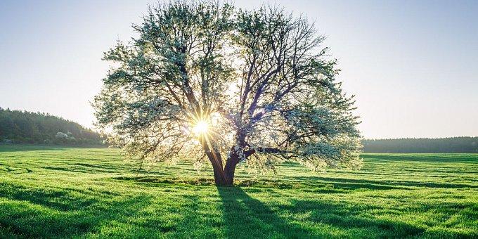 7 rituálů pro jarní rovnodennost: Jak se očistit a omládnout