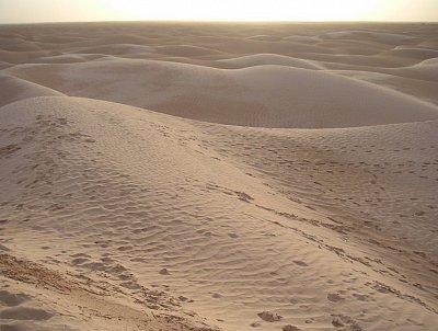 Sahara Zaafrane