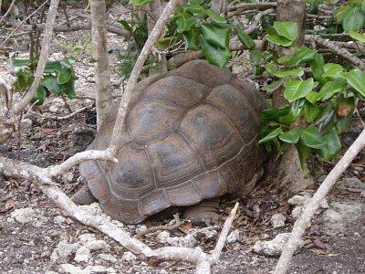 Želví obyvatelé ostrova