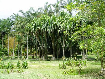 Botanická zahrada v Pamplemousses