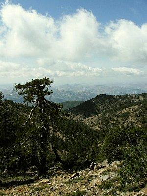 borovicemi porostlé pohoří Troodos (nahrál: vsv)