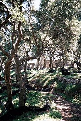 Parga - Kolem Pargy jsou krásné olivovnikové háje. (nahrál: Libor)