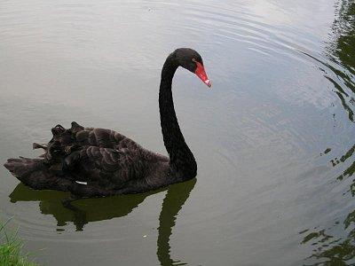 vodní ptáci ve Versailles (nahrál: admin)