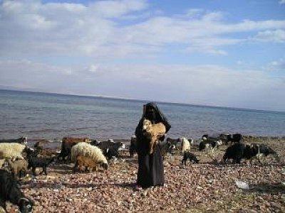 pasačka -  Na pobřeží pasou beduínky kozy na chaluhách (nahrál: Věra)