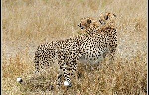 Keňa 2007 - Masai Mara