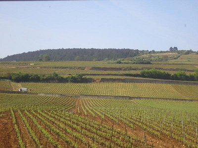 burgundské vinice (nahrál: Lucie Tichá)