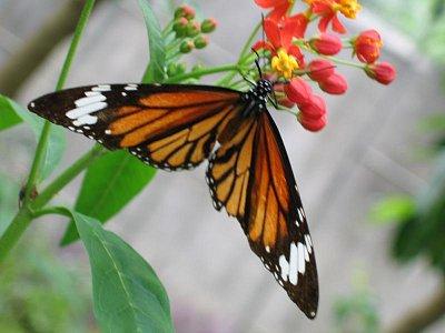 Okolí Yangzhuo - skleník s motýly (nahrál: admin)