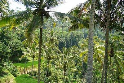 Krása přírody na Bali (nahrál: admin)