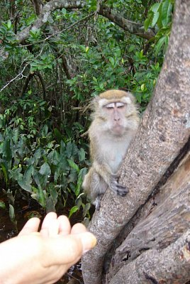 Opička na Borneu (nahrál: admin)