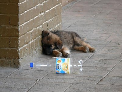 Městští psi v Aradu (nahrál: admin)