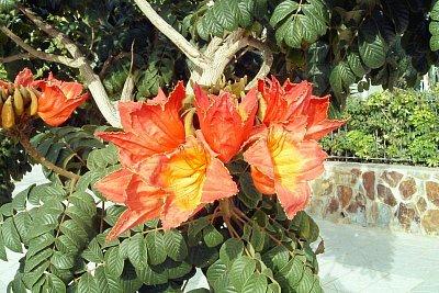 kvetoucí strom (nahrál: Karolko)
