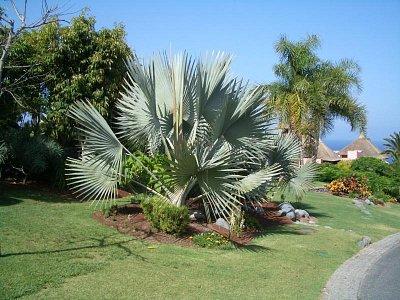 Tenerife - Zahrada v Abamě (nahrál: mikyky)