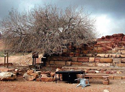Starý strom - Jeden z nejstarších stromů,nejen v Jordánsku. (nahrál: kangasero)