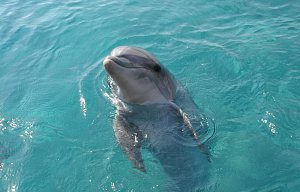 Eilat - delfíni + observatorium
