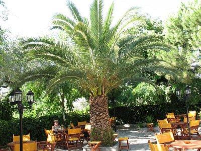 Skala Sotiros-místní oblíbená restaurace