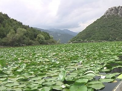 Skadarské jezero 4 (nahrál: Lubomír Klimeš)