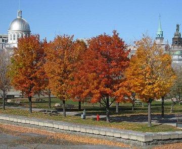 Montreal a Quebec - 2009