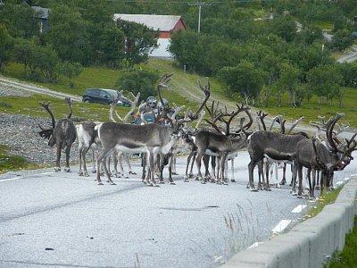 Nordkapp-běžná situace v dopravě (nahrál: Gaucho)