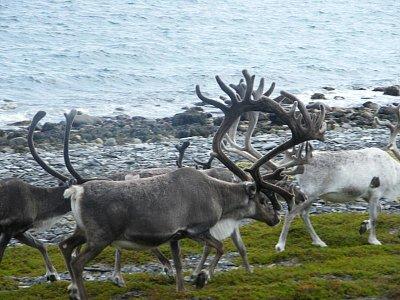 Nordkapp- pobřeží (nahrál: Gaucho)