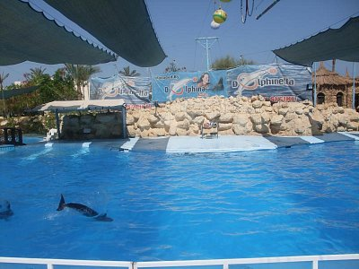 delfinárium - delphin shar el sheik (nahrál: jitata)
