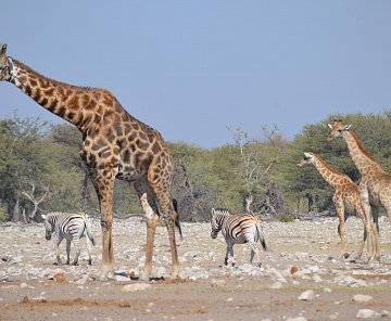 namibie červen 2015 - 5113 km