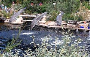 Delfíní show ZOO Norimberk