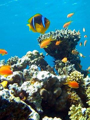 Pod mořem na útesu u Happy Life Village 1