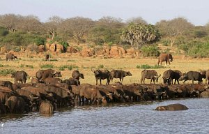 Kenya únor 2009