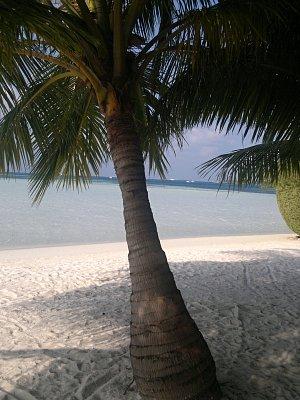 Maledivy 2012 - Club Faru