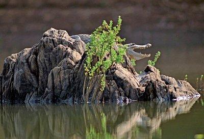 Krokodýl nilský (nahrál: Bohumil Prazský)