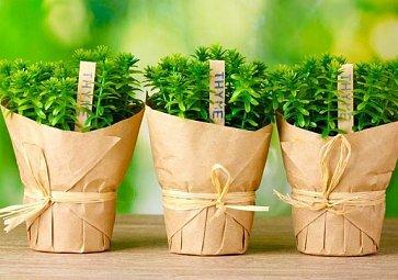 Vypěstujte si doma bylinky