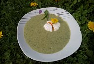 Pampelišková polévka od Lidušky