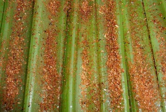 Smažený řapíkatý celer