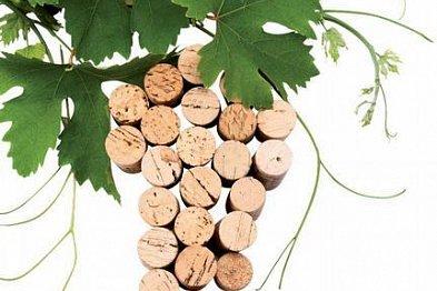 Moravská vína s mimořádným charakterem