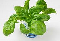 Rostbíf se salátem caprese a bylinkovým jogurtem