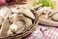Špenátové palačinky s houbovou náplní